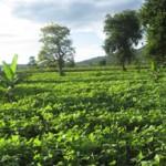 Kikatiti Soya Bean Farm for Orphans Foundation Fund