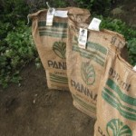 Seed for the Rafiki Farm in Tanzania